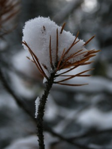 CAN_1201_0104